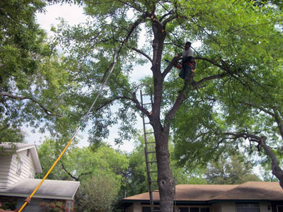 best time to prune trees san antonio