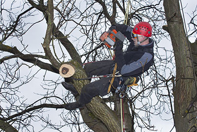 above all tree service tree pruning