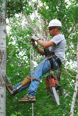 above all tree service arborist