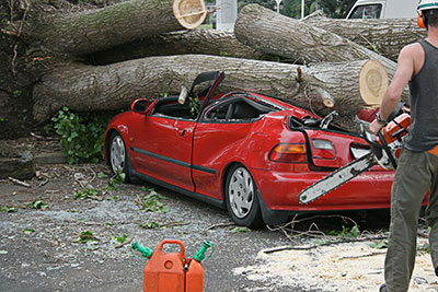 above all tree service emergency tree service