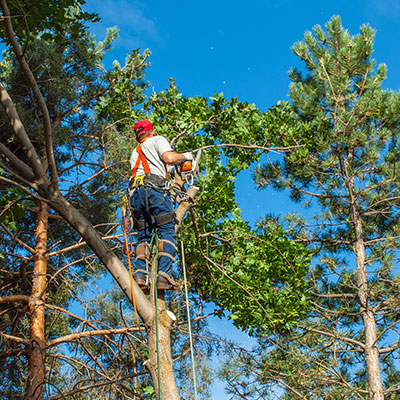above all tree service tree trimming