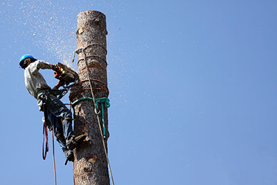 above all tree service tree removal