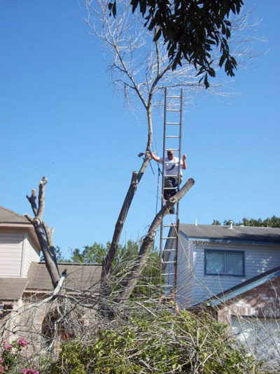 san antonio affordable tree care