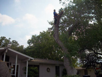 guaranteed tree work
