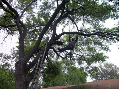 san antonio tree service faq