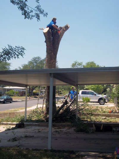 tree removal in san antonio tx