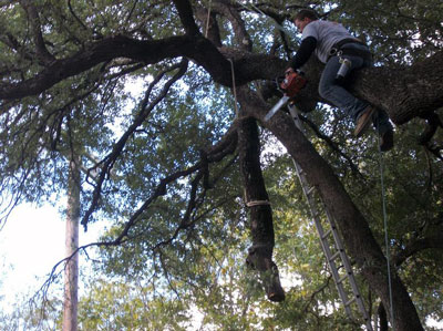tree care san antonio texas