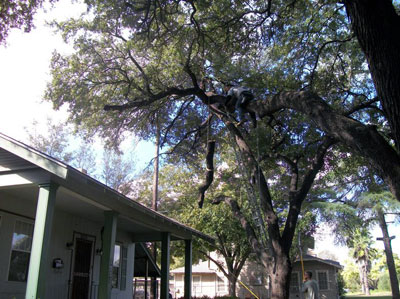 san antonio tree trimming