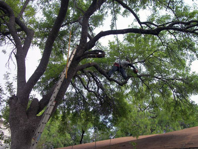 best time to trim trees san antonio