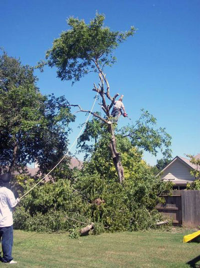 san antonio tree removal