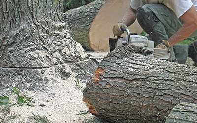 above all tree service stump removal