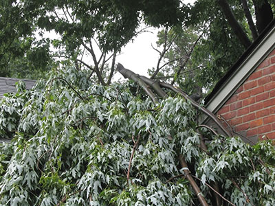 emergency tree service san antonio